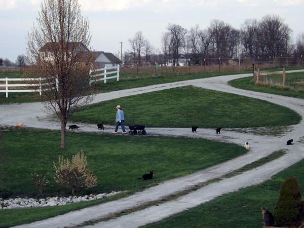"""""""The cat lady"""" (Linda Rosencrans) heading to the barn to feed the cats.<br /> <br /> Photographer's Name: J.R. Rosencrans<br /> Photographer's City and State: Alexandria, Ind."""