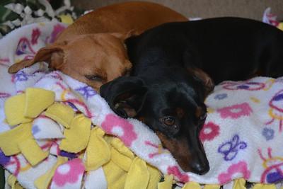 Rusty and Zoey Sintas