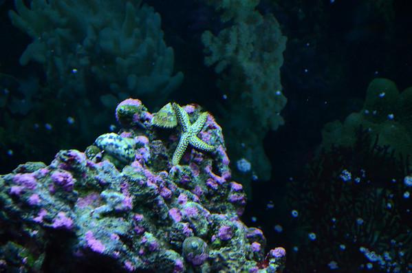 Aquarium & Nature