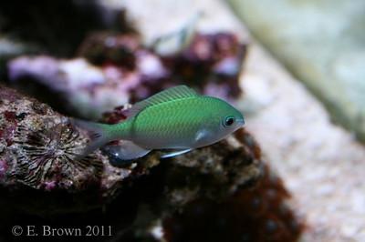 Aquariums and Fish