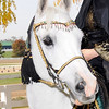 Arabian 102109 :