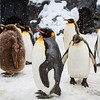 Penguins Chillin'