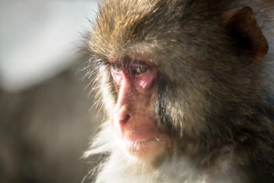 Arashiyama Zoo