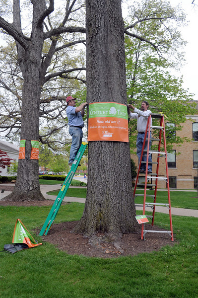 """On Arbor Day this year, BGSU announced its Century Tree Program. Throughout 2010, our 100th anniversary, we're honoring the trees on our campus that have been with us from the start with banners and a website: <a href=""""http://www.bgsu.edu/offices/mc/page81100.html"""">http://www.bgsu.edu/offices/mc/page81100.html</a>"""