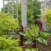 Arboretum in Mpls 1833 (10 of 89)