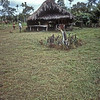 Village along the Sepik River, Papua New Guinea.