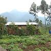 Farm in the shadow of Mt. Sabinyo, Rwanda.