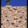 Plant on a wall, Valetta, Malta.
