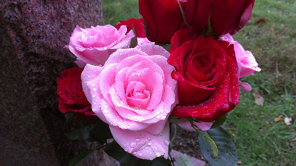 Shot taken with my Evo 4G LTE - Grave site during the rain.
