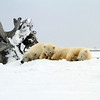 Arctic National Wildlife Refuge : 1 gallery with 9 photos