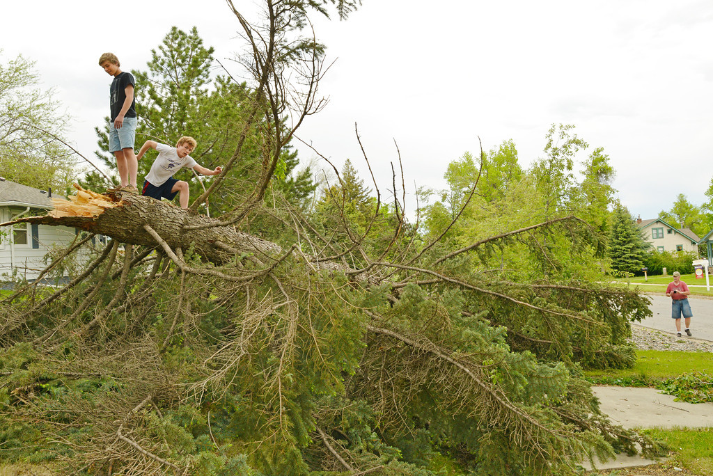 Alexander Hanify, left, and Jackson Hanify walk on top of a fallen tree on S. Thurmond after strong winds brought it down Tuesday afternoon. The Sheridan Press|Justin Sheely