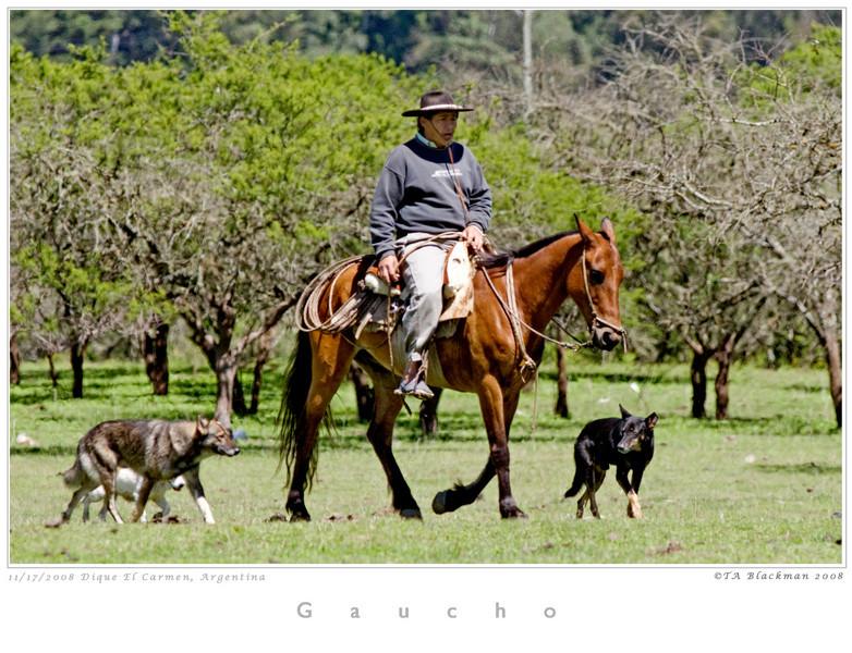 Gaucho TAB08MK3-16297