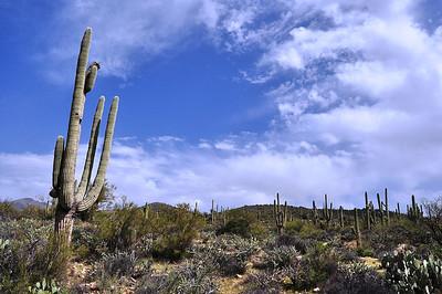 Arizona 2014