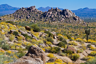 Boulders in the desert