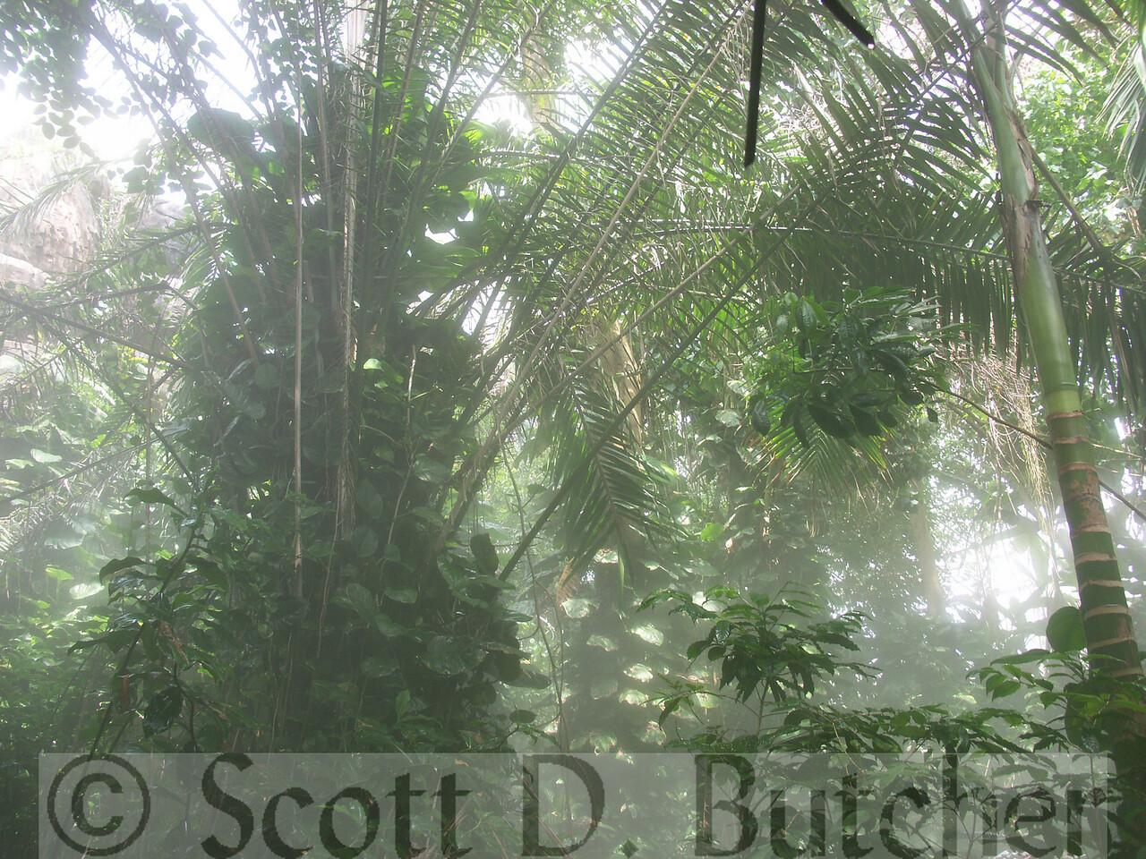 Biosphere 2 - Tropical Rain Forest Biome