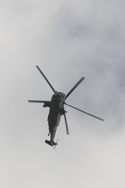 The Greater Spotted Sea King in flight