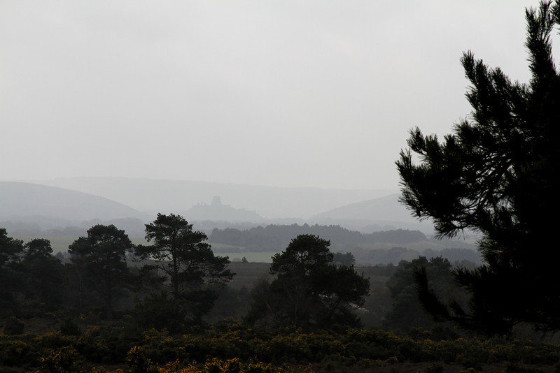 Corfe Castle looms in the mist on a dull morning
