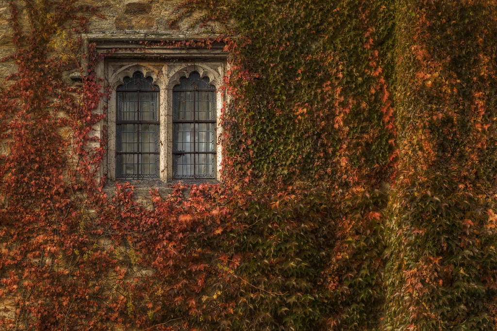 Framed with ivy