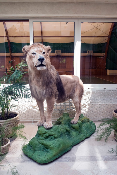 Межигір'я, former President Viktor Yanukovich's residence outside Kyiv, Ukraine. Stuffed lioness.