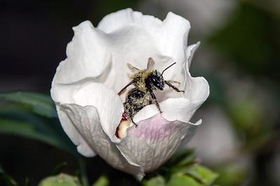 Bee 081517