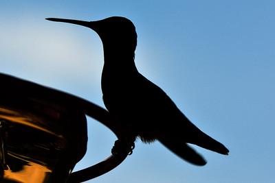 Hummingbird 090509 3