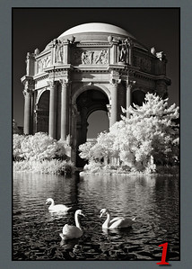 3 Swans at the Palace of Fine Arts