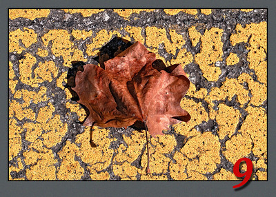 Autum Leaf in Crosswalk