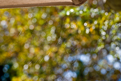 This is from a series of pictures of 3 spiderwebs in my back yard.  More than anything I was playing with angles to get interesting light effects.  All were shot hand held with a Nikon D80 and AF-S VR Zoom-Nikkor 70-300mm f/4.5-5.6G IF-ED (4.3x) lens.  You got to love that Vibration Reduction Technology.