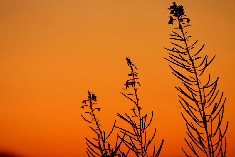 """Fireweed Skeletons""<br /> Juneau, Alaska"