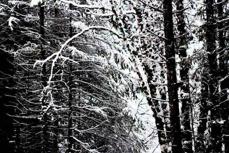 Snow Recline