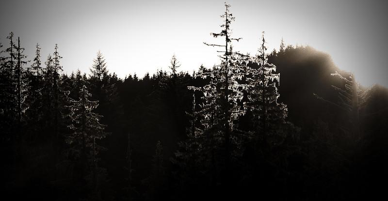 """""""Trees""""<br /> Juneau, Alaska"""