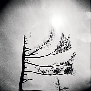 Halifax, Point Pleasant Park (Holga)