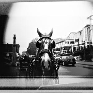Lunenburg Horse (Holga)