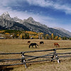 Horse Ranch At The Grand Teton National Park,Wy Photo # 95