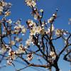 Pulm season,spring,Japan