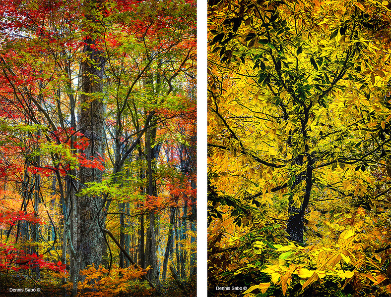 Left: Autumn Fireworks and Right: Leafing Impressions