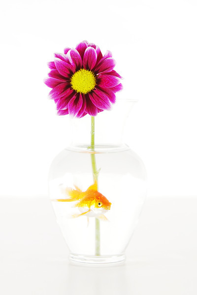 fish and flower_a 8x12