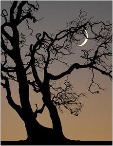 Lone Tree & Moon