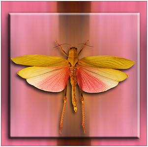 Grasshopper Flight