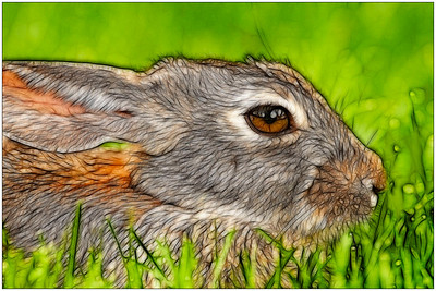 Painted Rabbit