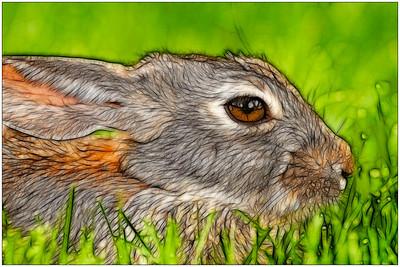 Painted Rabbit