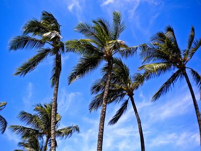 Maui 10-2