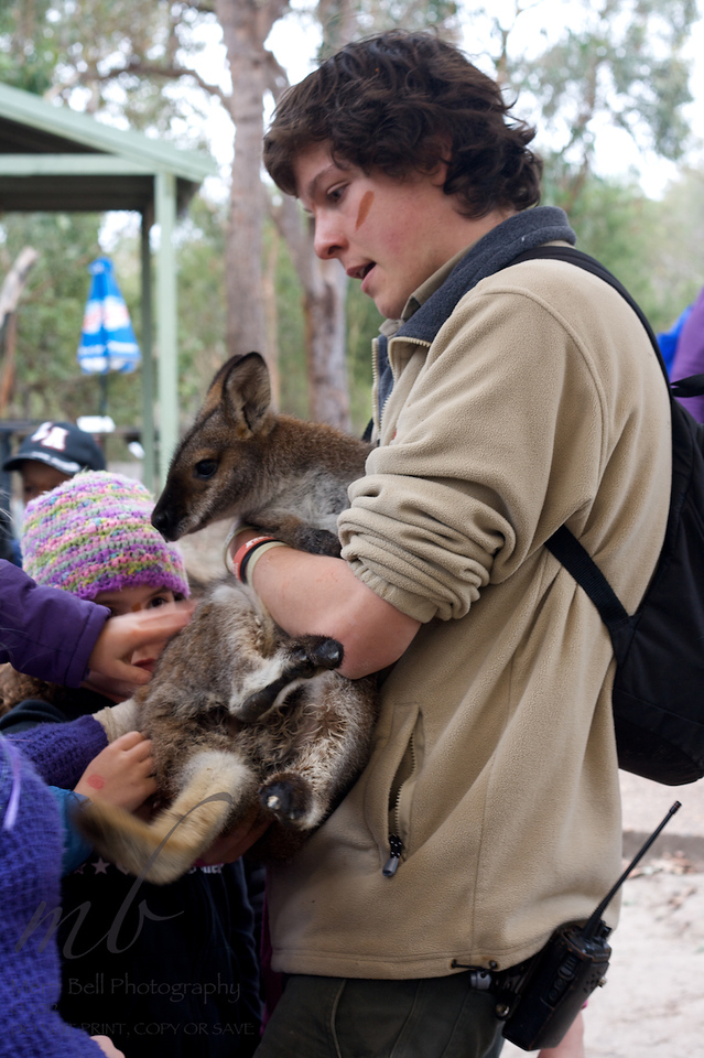 The joey (baby kangaroo) was too feisty for cuddles with Ashley, but she was able to pat him