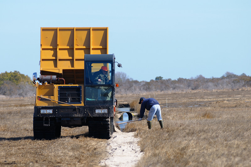 3/8/11  Marsh machine filling in skeeter ditches ( they don't work and change the ecology of the marsh) with sand.
