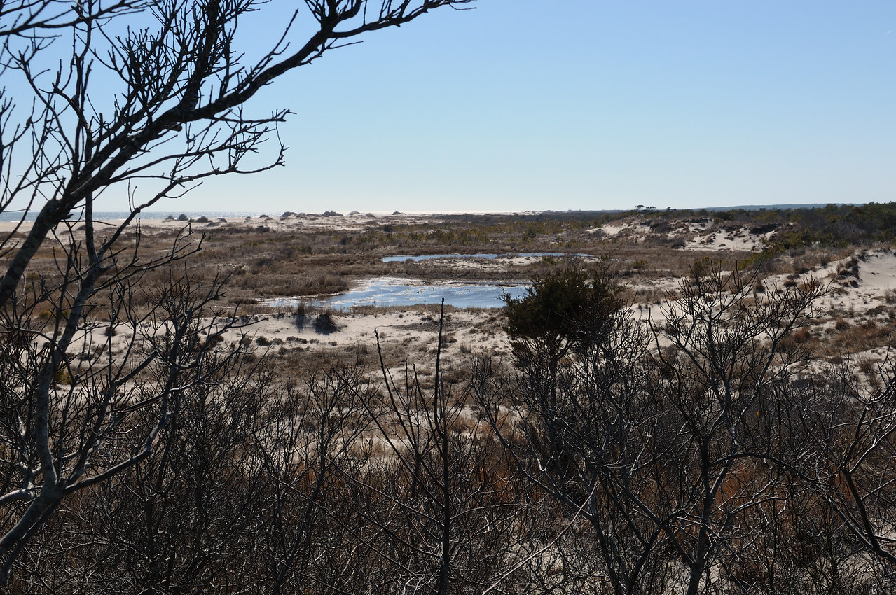 "Brackish pools often back up to the dunes........I believe Mac called this one ""Cedar Lake"" in the old gunning days."