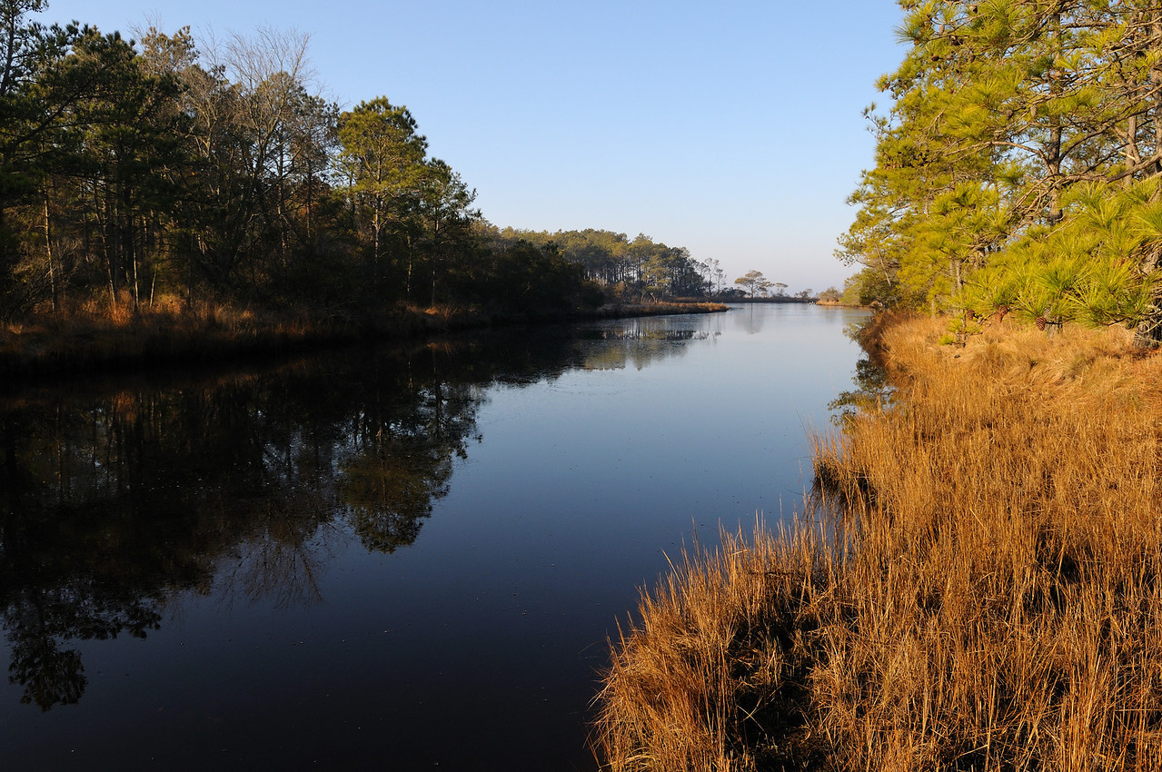 Could there be a more beautiful place on Assateague?