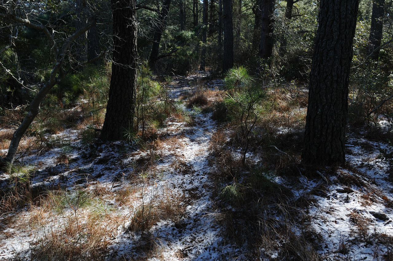 Typical horse trail deep in the forest.
