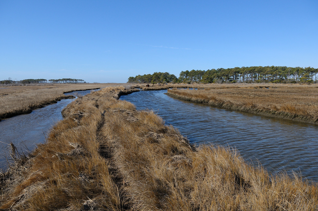 The walk to the Gunning Club is a beautiful one, winding across a long expanse of marsh with water on both sides.