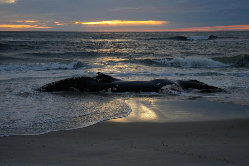 whale of a sunrise............