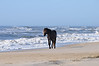 Assateague Island Landscapes and Critters, a random blend of everything non-fishing. :